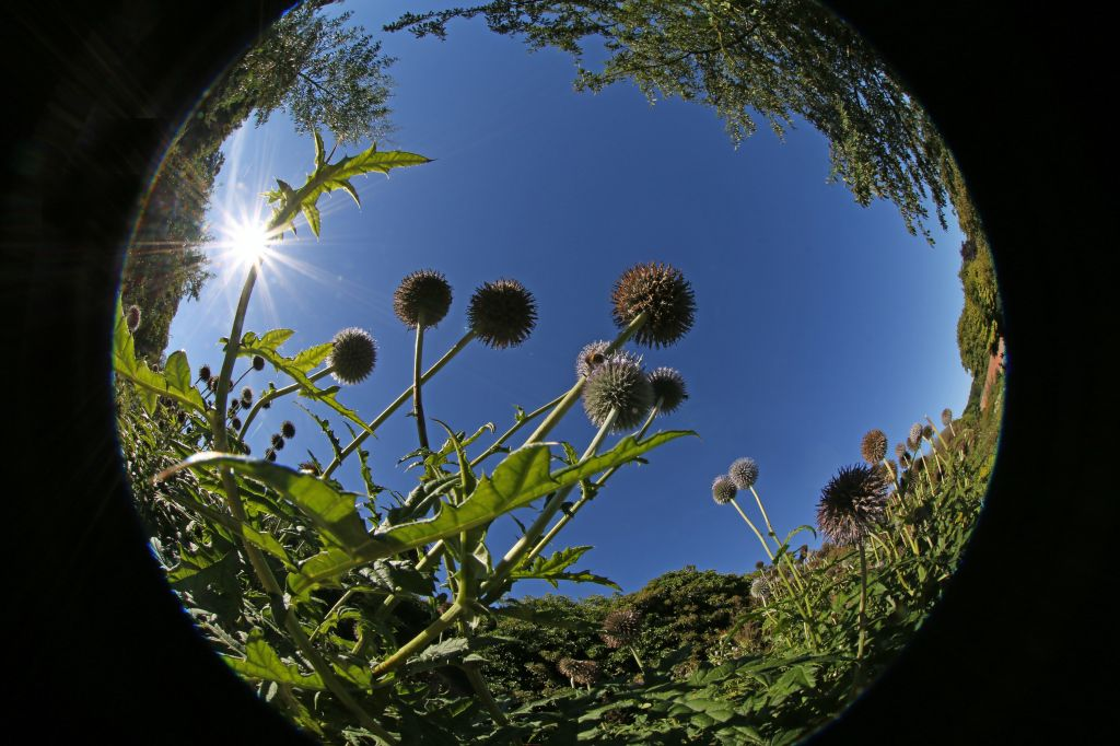 Fabulous Fish-Eye Fun!